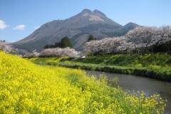 湯布院/春の由布岳